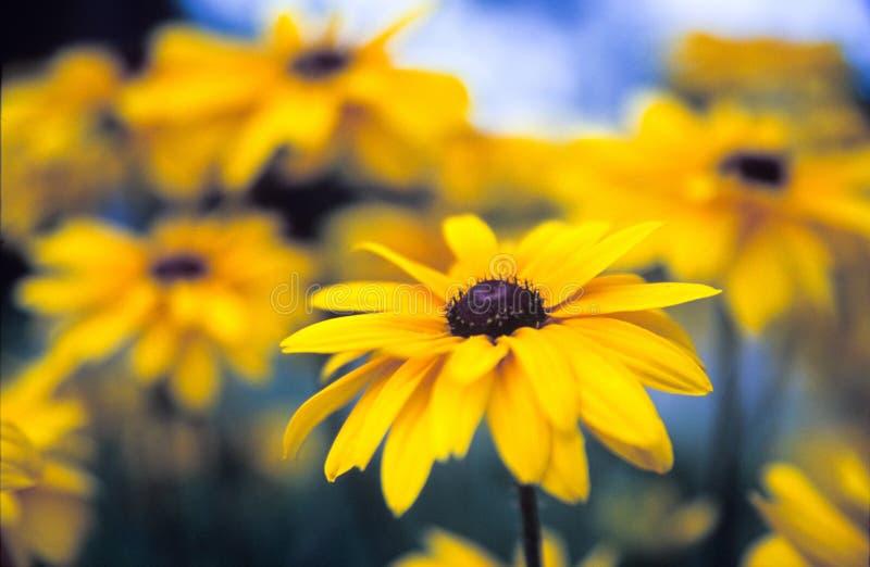 wild färgrika blommor arkivbild
