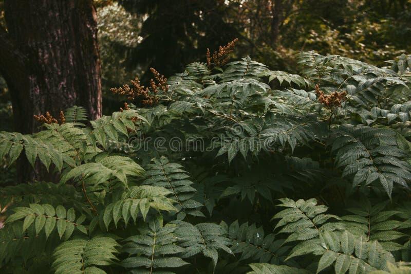 wild fern royaltyfri foto