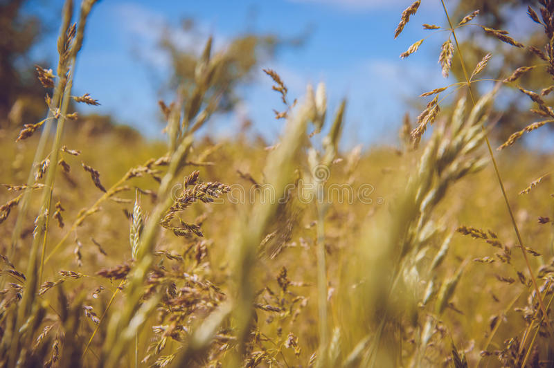 Wild field stock images