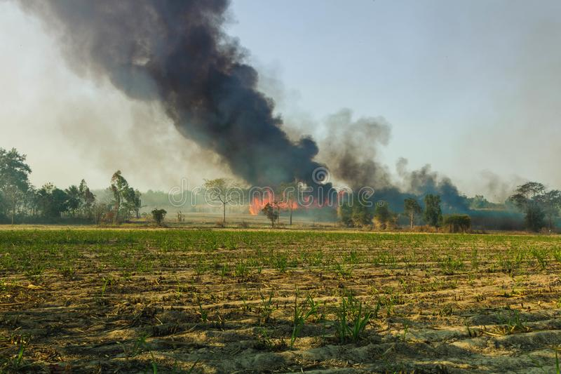 Wild fires that are spreading to sugarcane of farmers fields and have the large smoke groups.  royalty free stock photo