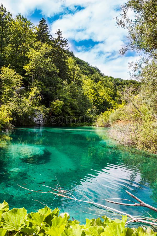 Wild fish swims in the forest turquoise lake. Plitvice, National Park, Croatia.  royalty free stock image