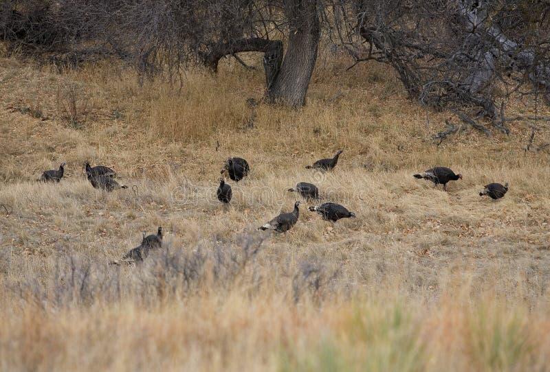 Download Wild Flock Stock Photo - Image: 28321500