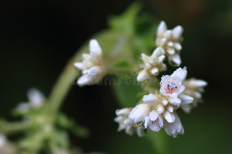 Download Wild flower stock photo. Image of nature, flora, asia - 26160656