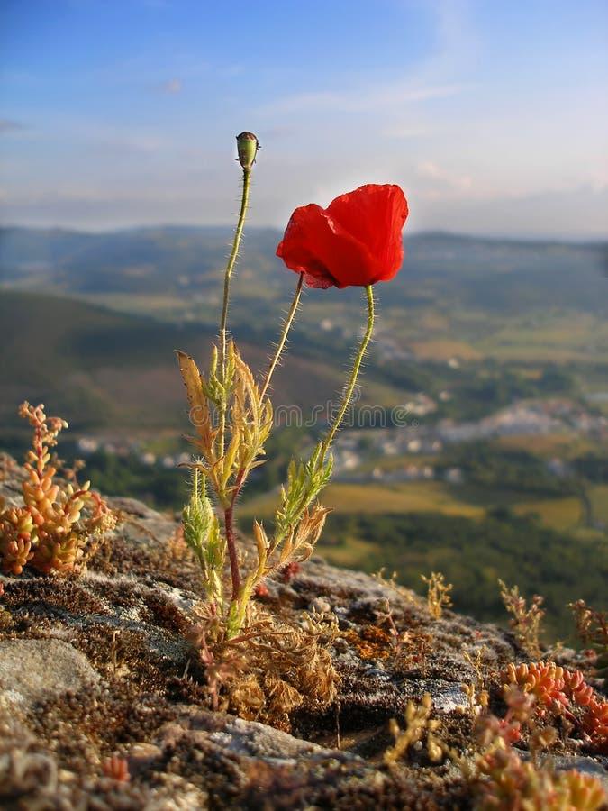 Download Wild Flower stock image. Image of spring, bloom, green - 8220507