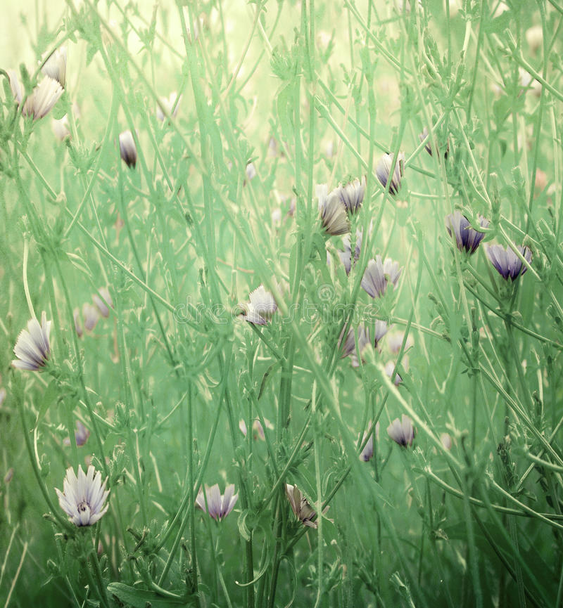 Free Wild Flower Art Print On Paper Royalty Free Stock Photo - 13004425