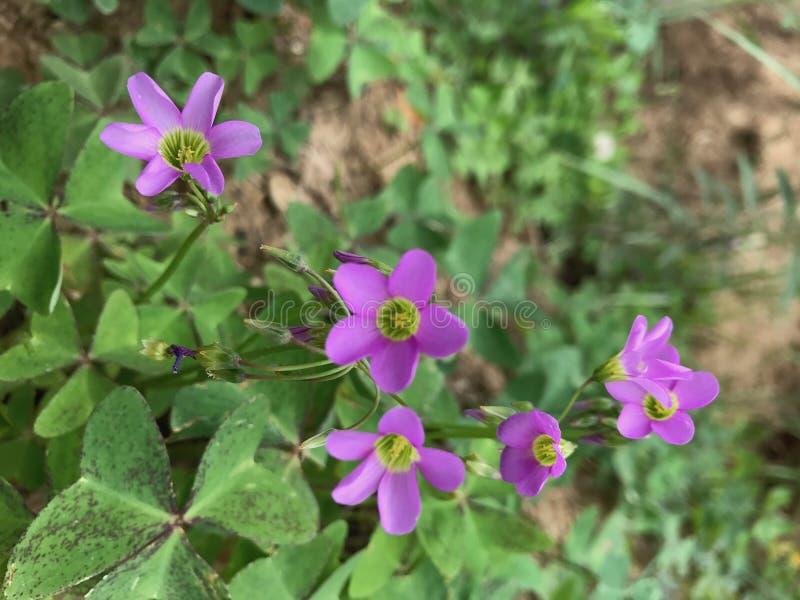 Wild flower. Beautiful flowers, Gress Flower royalty free stock image