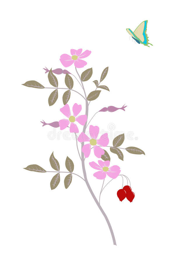 Download Wild flower with butterfly stock vector. Image of aroma - 3405338