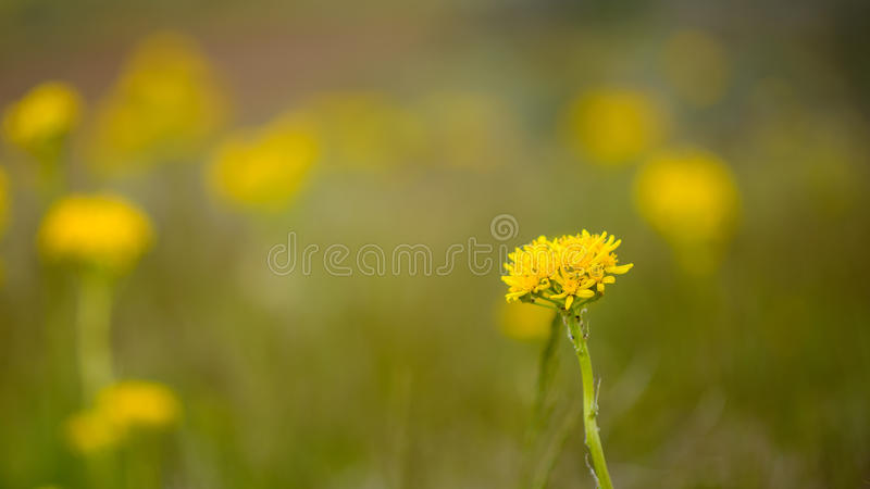 Wild flower stock image