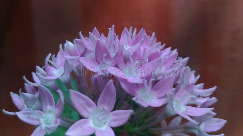 Wild flower 2 stock photo
