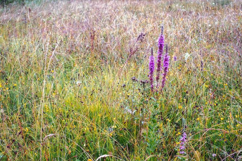 Wild flower field after rain royalty free stock images