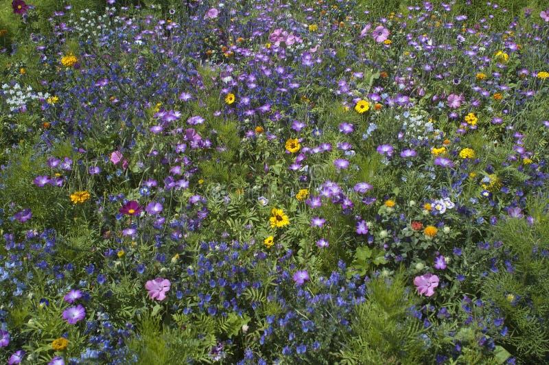 Wild flower fields royalty free stock photo