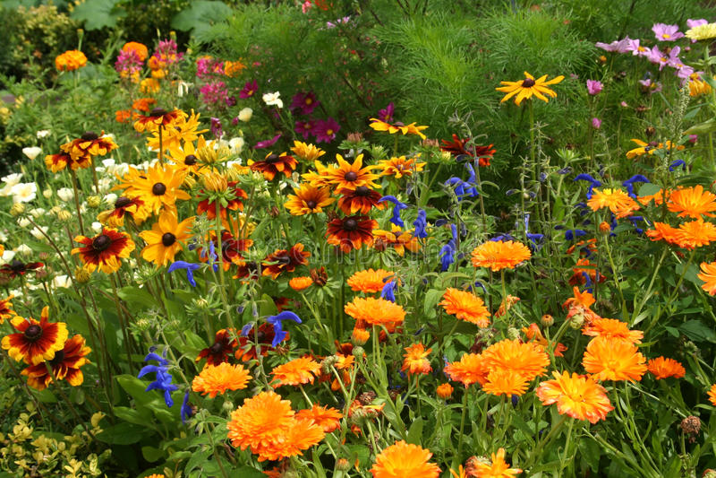 Wild flower garden stock image