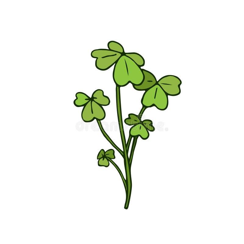 Wild flower illustration. Shamrock herbal. Vector art. stock illustration