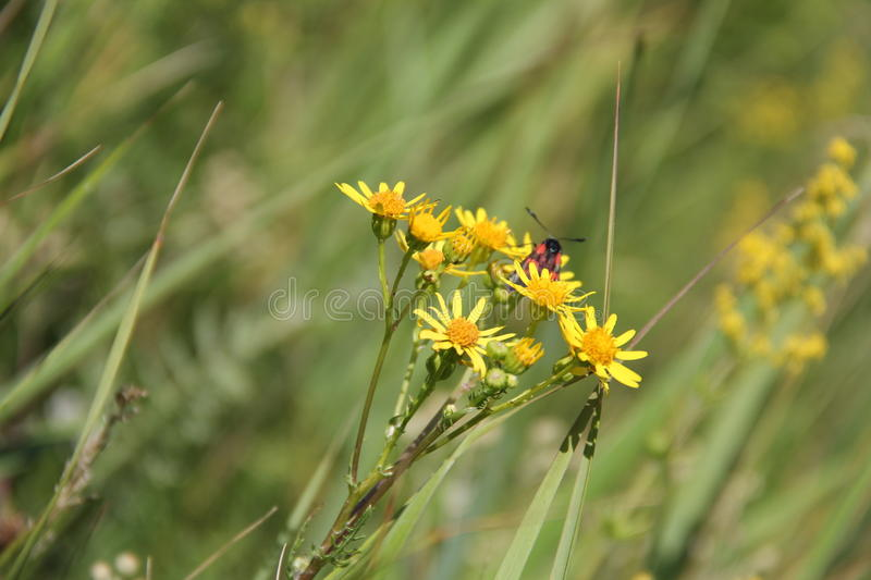 Wild flower with insect royalty free stock photos