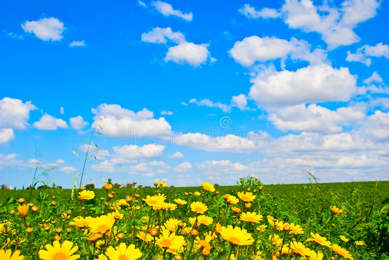 Download Wild Flower Meadow Stock Photography - Image: 8614832