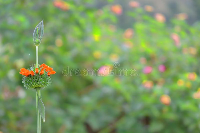Wild flower, natural background stock photo