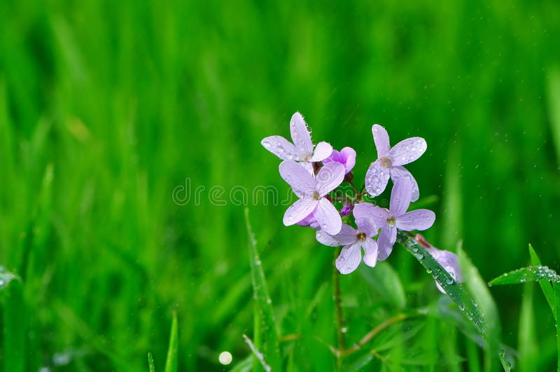 Download Wild flower in the rain stock image. Image of drops, focus - 39290837