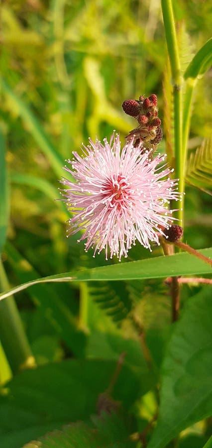 Wild flower small look nice stock photos