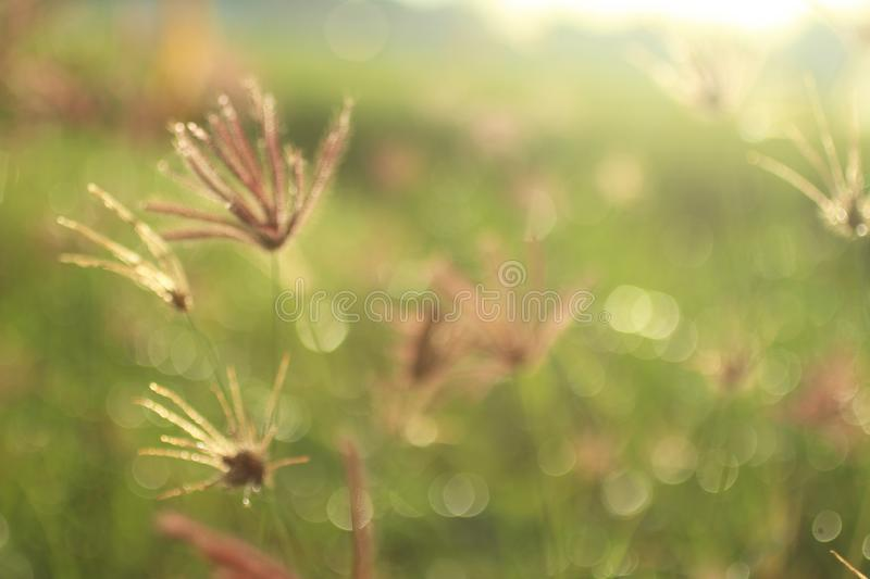 Wild flower in spring background. Meadow & the sunrise sunset warm light backgrounds. Copy space for text and design royalty free stock image