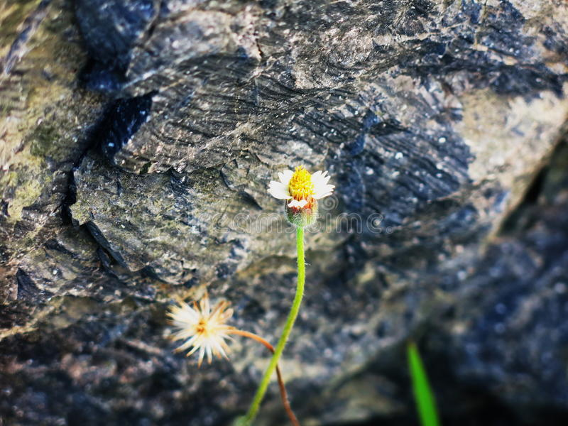 Wild flower on stone stock photos