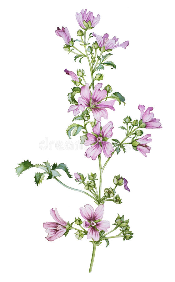 Wild flower royalty free illustration