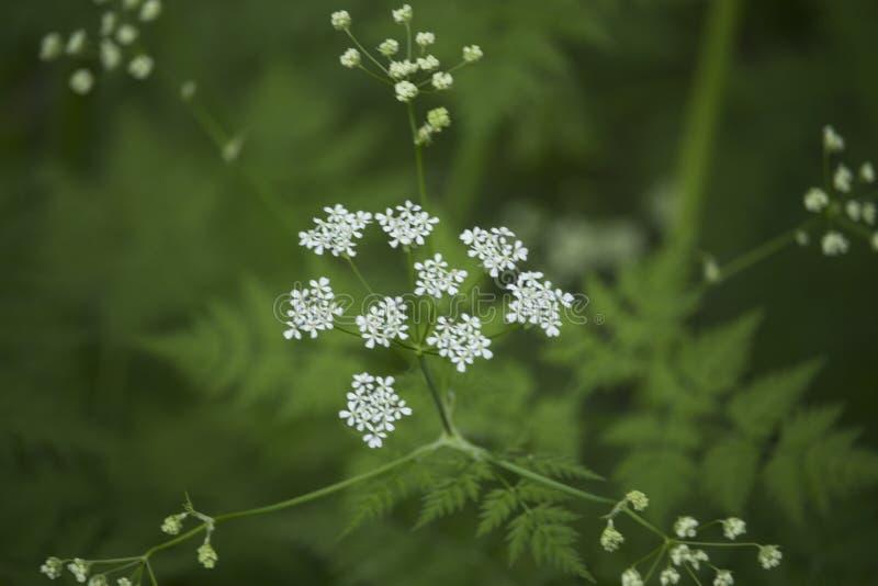 Wild flower. The wild flower stock images