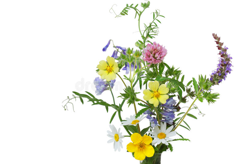 Download Wild Flowers stock photo. Image of leaf, flower, blooming - 10431262