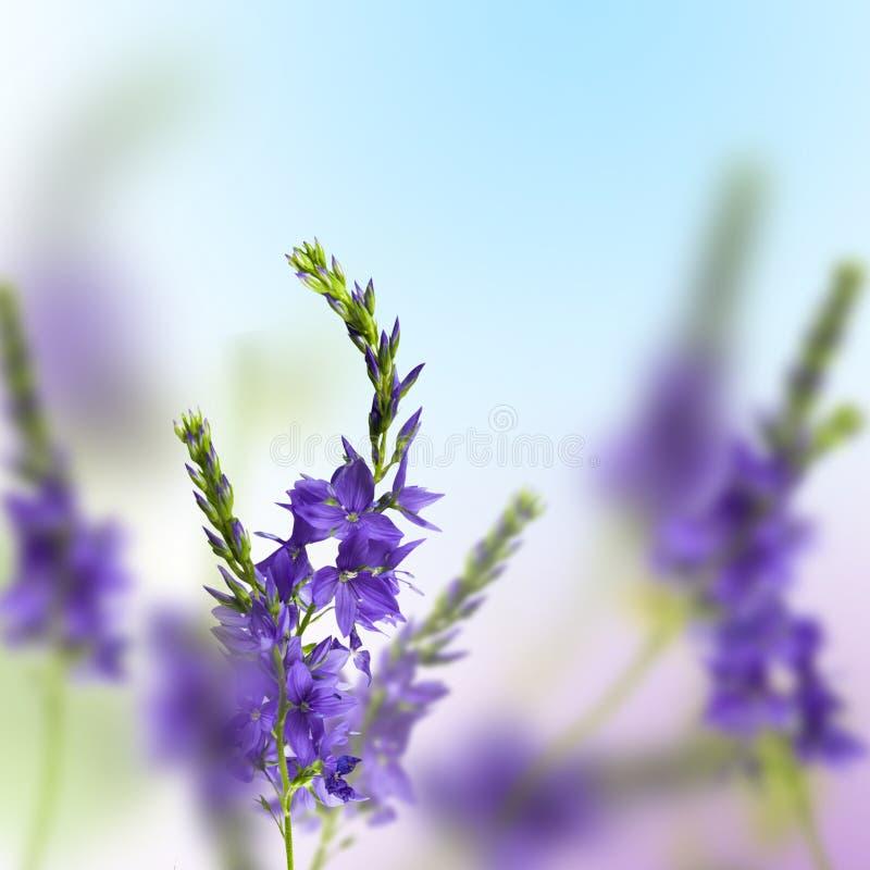 Free Wild Flowers Stock Photography - 18886142