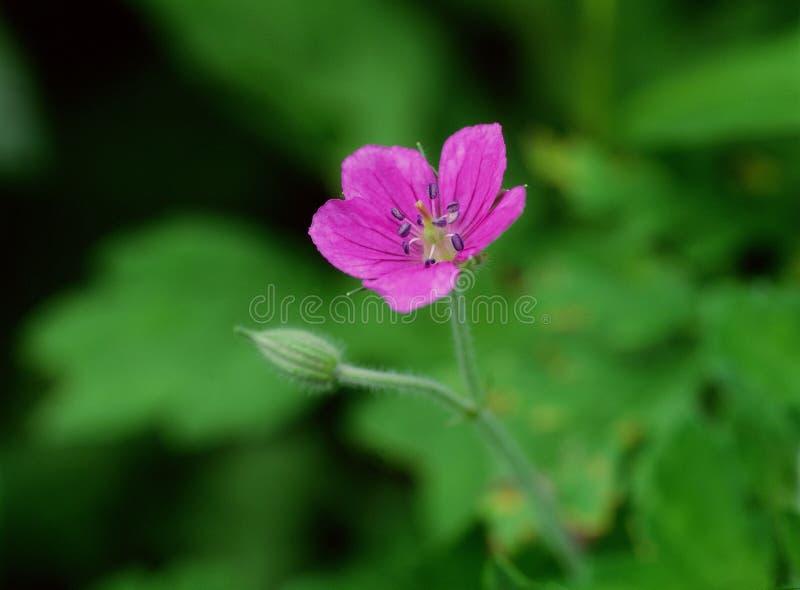 Wild Flowers Free Stock Image