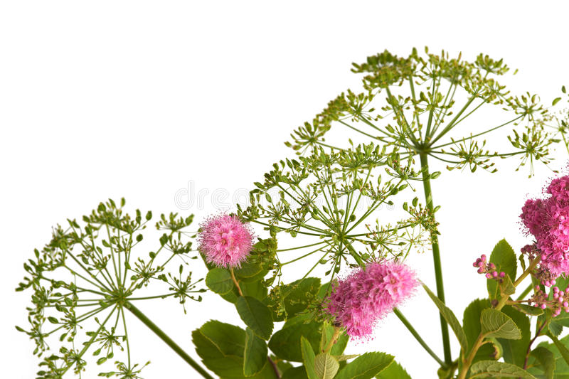 Download Wild Flowers stock photo. Image of macro, growth, nature - 26028244