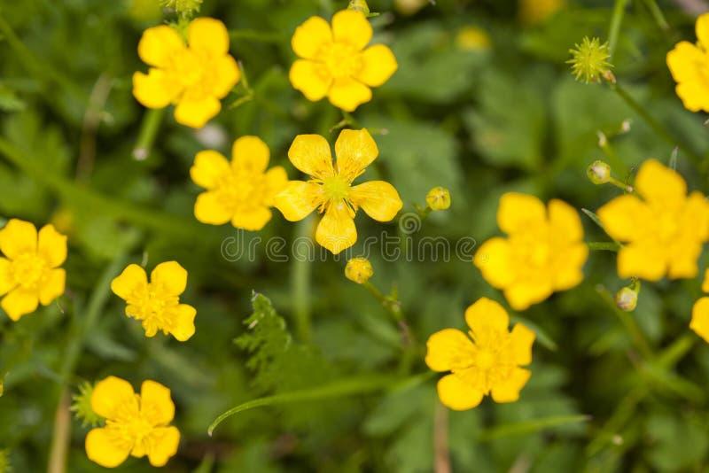 Download Wild Flowers Stock Photos - Image: 26320843