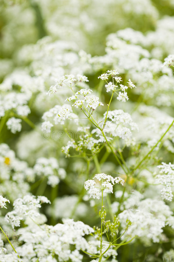 Download Wild flowers stock image. Image of wild, flower, spring - 26320861