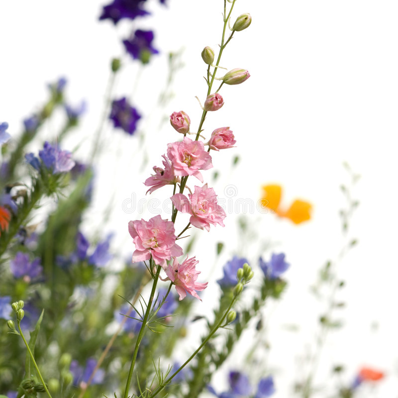 Wild flowers royalty free stock photo