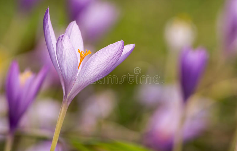 Download Wild flowers stock image. Image of garden, autumnale - 28571971