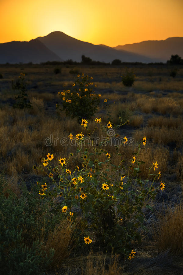 Download Wild flowers stock photo. Image of grass, sunset, hills - 28779858