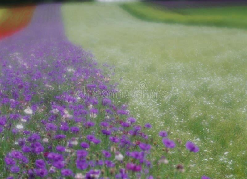 Download Wild Flowers stock photo. Image of scenery, soft, purple - 295390