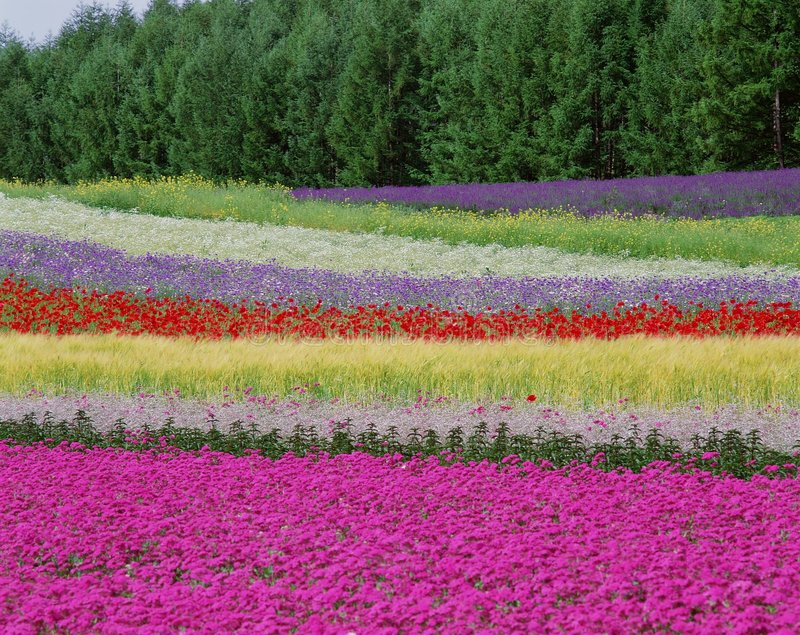 Download Wild Flowers stock photo. Image of color, wild, stripes - 303790