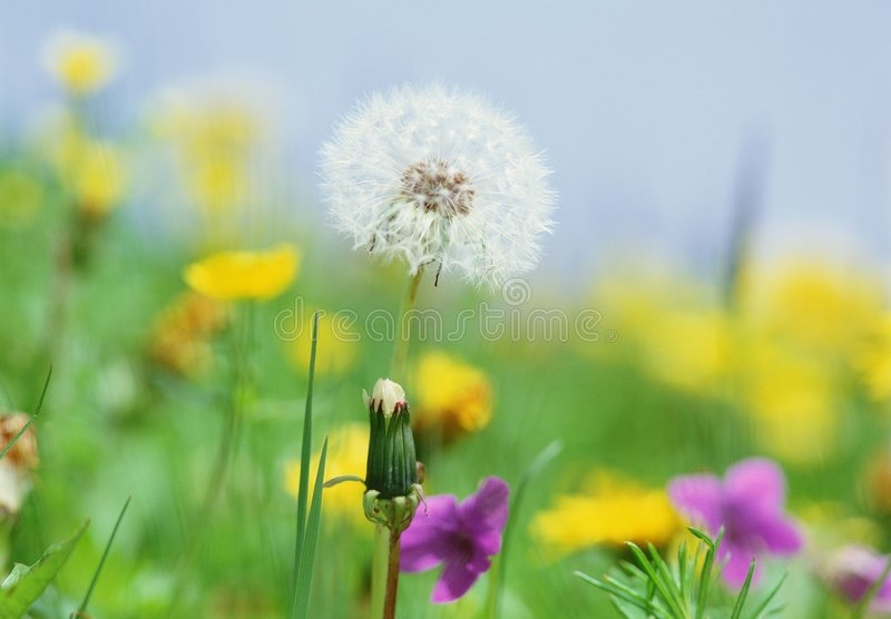 Download Wild Flowers stock photo. Image of bright, colorful, grass - 337860