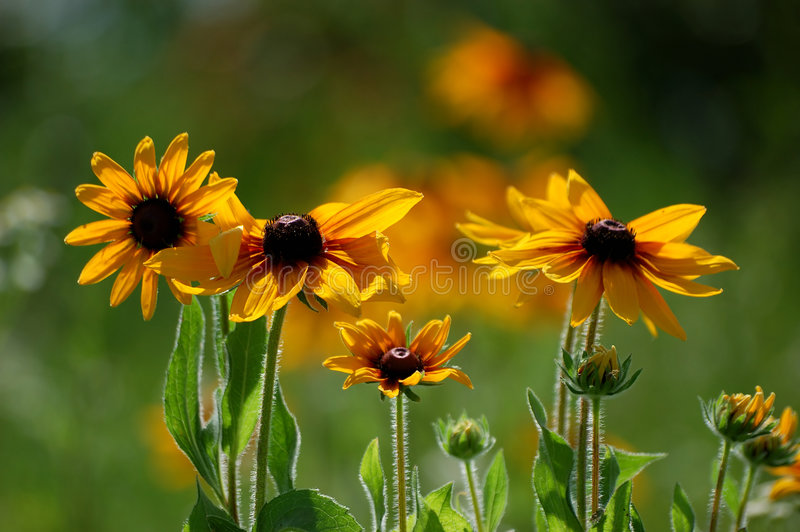 Download Wild Flowers Stock Photos - Image: 3858673