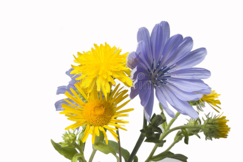 Download Wild flowers stock photo. Image of isolated, wild, small - 7036234