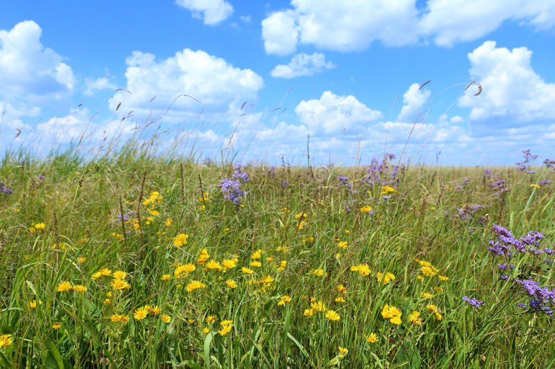 Wild flowers and beautiful sky royalty free stock photo