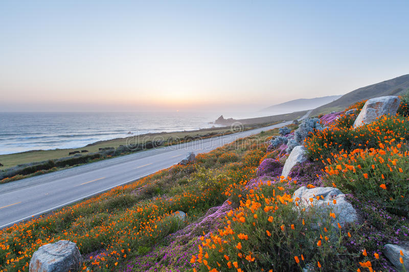 Wild Flowers In Big Sur Royalty Free Stock Photos