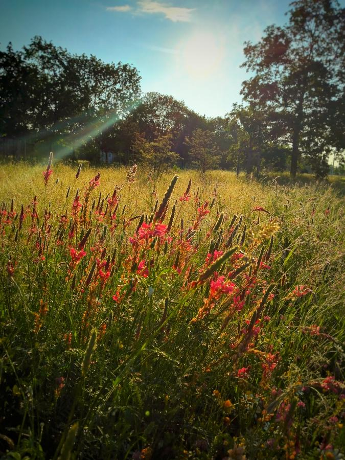 Download Wild flowers stock image. Image of flowers, background - 72725051