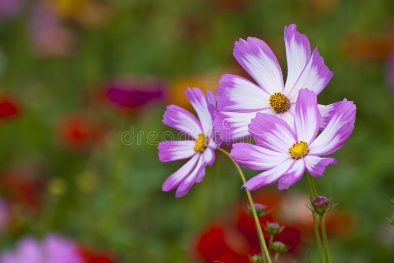 Download Wild flowers stock photo. Image of blossom, nature, closeup - 31093028
