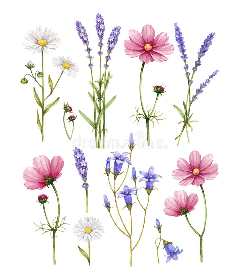 Wild flowers collection stock images