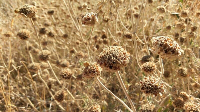 Wild flowers drying in field, Kalamos Island, Greece royalty free stock photos