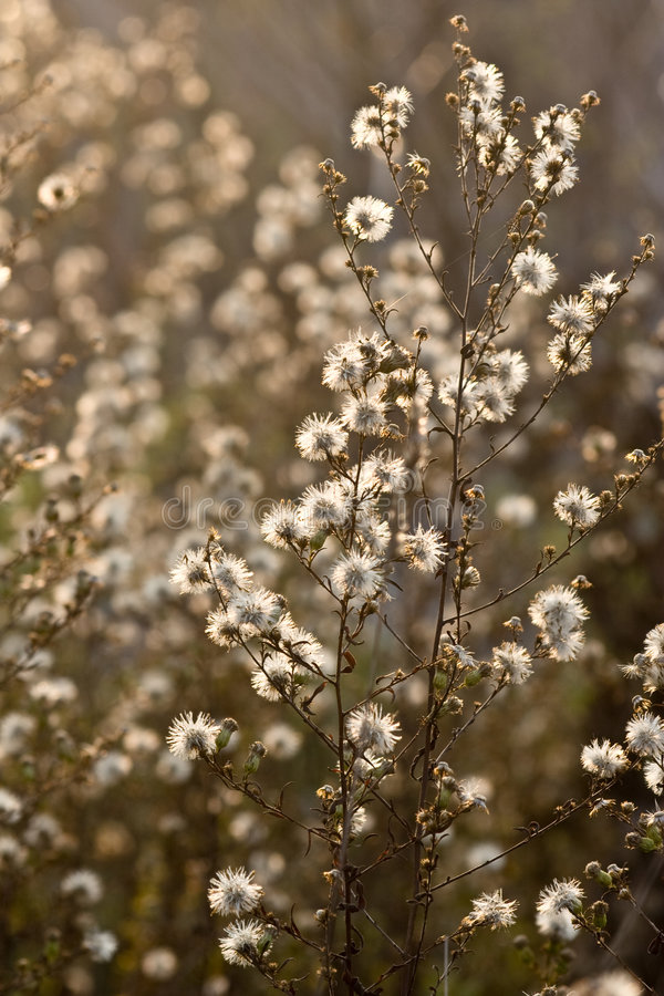 Download Wild flowers and fauna stock image. Image of background - 7156503