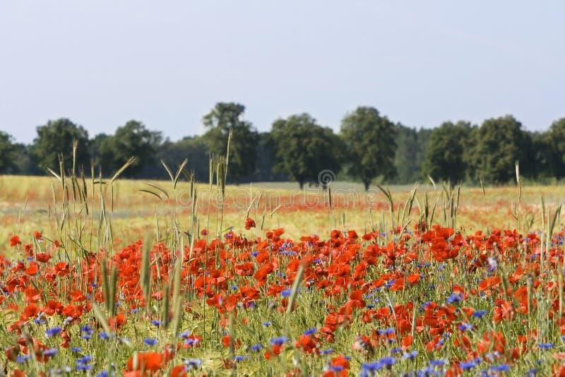 Wild flowers in field stock image
