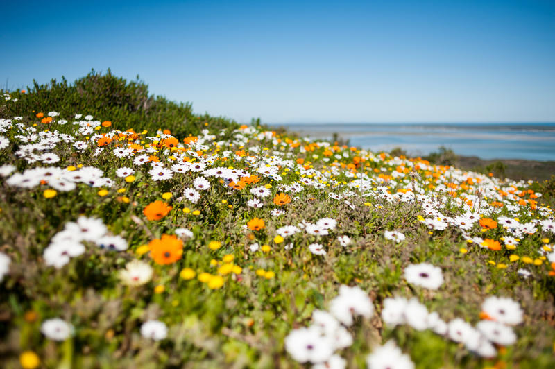 Download Wild Flowers Royalty Free Stock Images - Image: 33196999