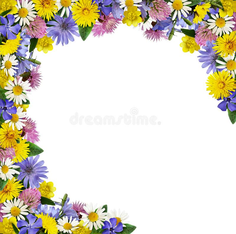 Wild flowers in a frame arrangement. Isolated on white background stock photography